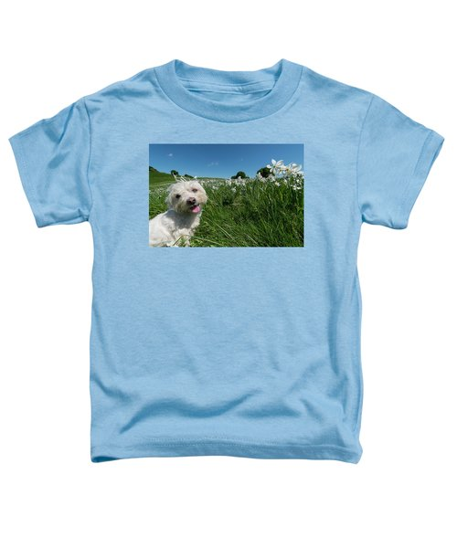 Blooming Daffodils In The Antola Park With Maltese II Toddler T-Shirt
