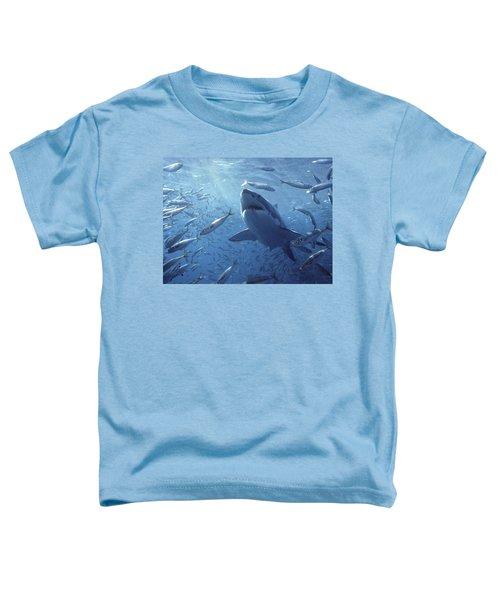 Great White Shark Carcharodon Toddler T-Shirt