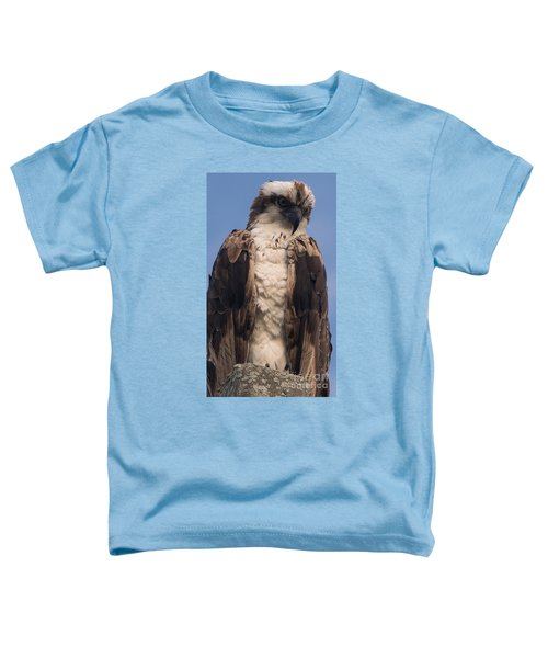 Hawk Glare Toddler T-Shirt