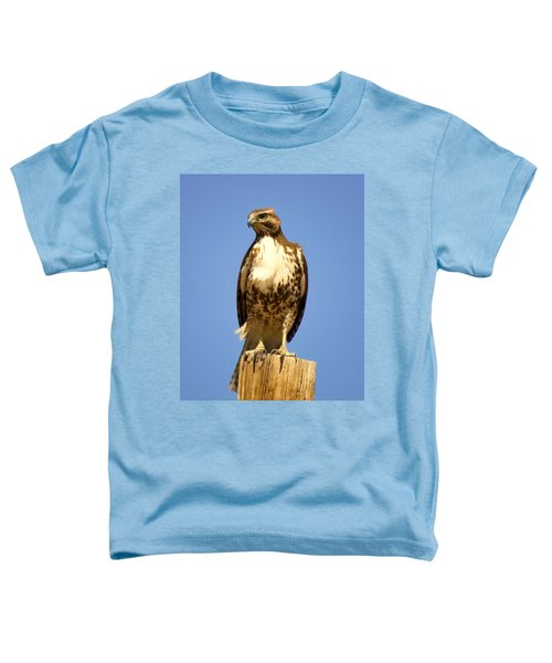 Red-tailed Hawk On Post Toddler T-Shirt