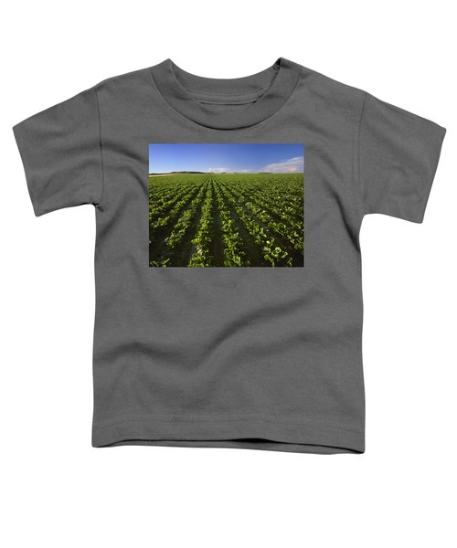 Agriculture - Field Of Maturing Sugar Toddler T-Shirt
