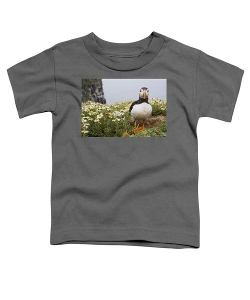 Atlantic Puffin In Breeding Plumage Toddler T-Shirt