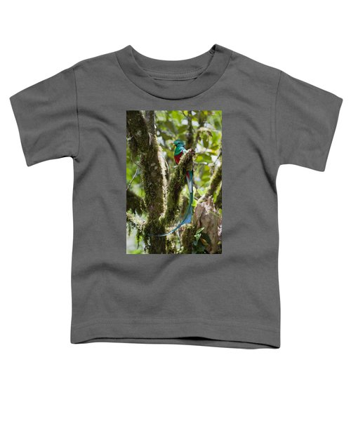 Resplendent Quetzal Male Costa Rica Toddler T-Shirt