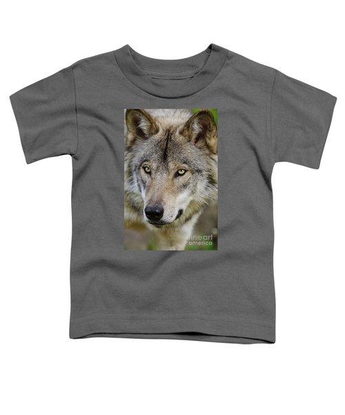 Timber Wolf Portrait Toddler T-Shirt