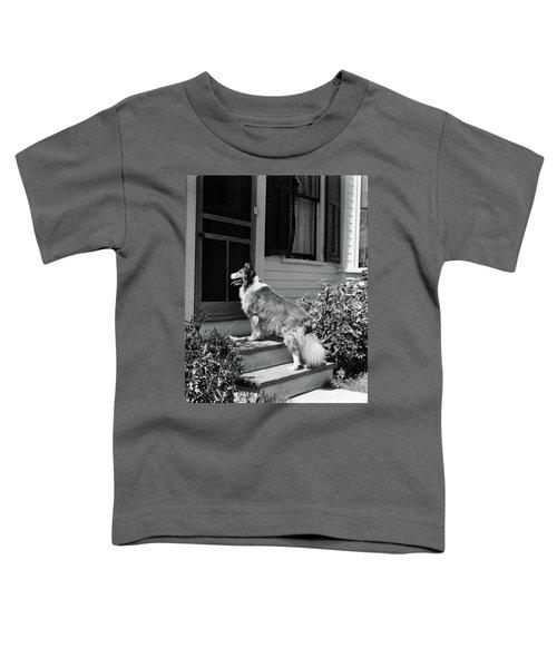 1930s Rough Scotch Collie Dog Standing Toddler T-Shirt
