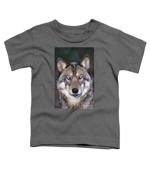 Gray Wolf Portrait Endangered Species Wildlife Rescue Toddler T-Shirt