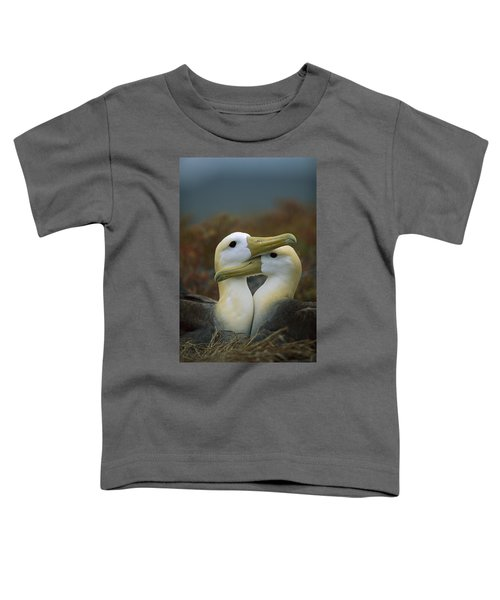 Waved Albatross Pair Bonding Galapagos Toddler T-Shirt by Tui De Roy