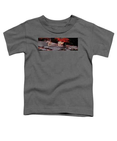 Timber Wolves Under A Red Maple Tree - Pano Toddler T-Shirt