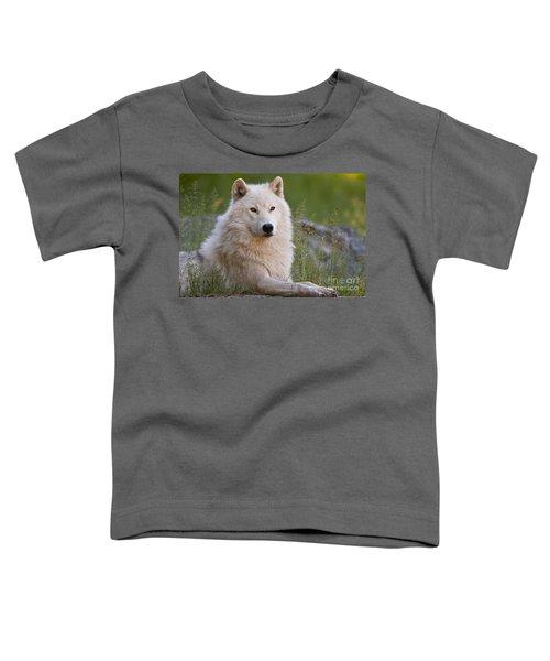 Arctic Wolf Toddler T-Shirt