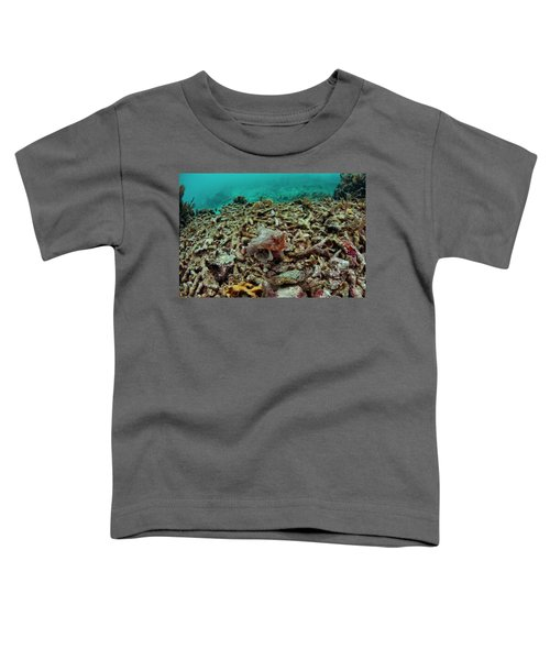 A Batfish Swims By Coral In Glovers Toddler T-Shirt