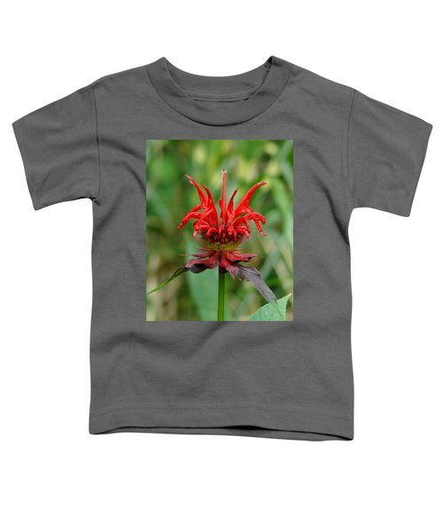 A Flowering Red Castle Beauty Toddler T-Shirt