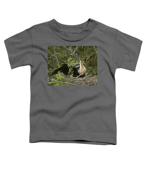Anhinga Mama Toddler T-Shirt by Phill Doherty