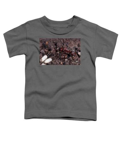Ant Queen Fight Toddler T-Shirt by Gregory G. Dimijian, M.D.