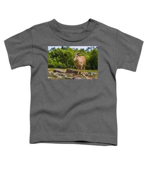 Barbary Sheep Toddler T-Shirt
