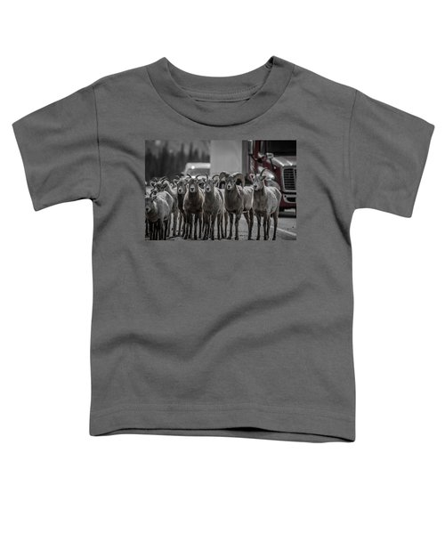 Big Horn Sheep Road Block Toddler T-Shirt
