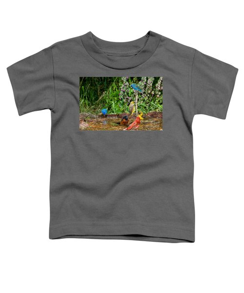 Birds Bathing Toddler T-Shirt by Anthony Mercieca