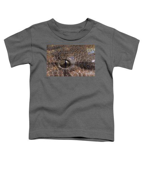 Boa Constrictor Toddler T-Shirt by Chris Mattison FLPA