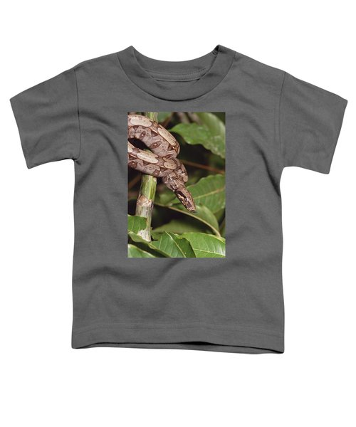 Boa Constrictor Coiled South America Toddler T-Shirt by Gerry Ellis