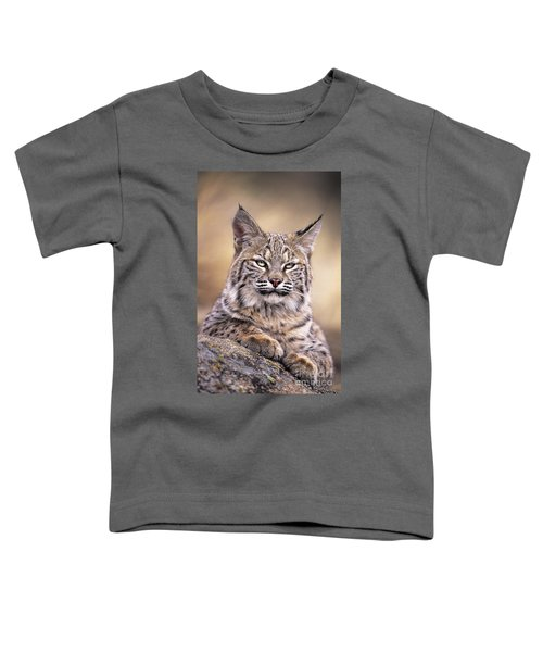 Bobcat Cub Portrait Montana Wildlife Toddler T-Shirt