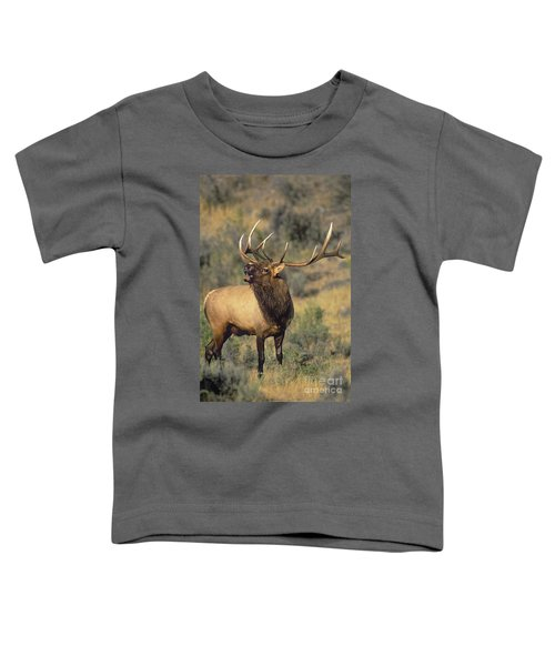 Bull Elk In Rut Bugling Yellowstone Wyoming Wildlife Toddler T-Shirt