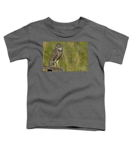 Burrowing Owl Stare Toddler T-Shirt