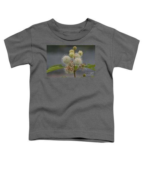 Buttonbush Toddler T-Shirt