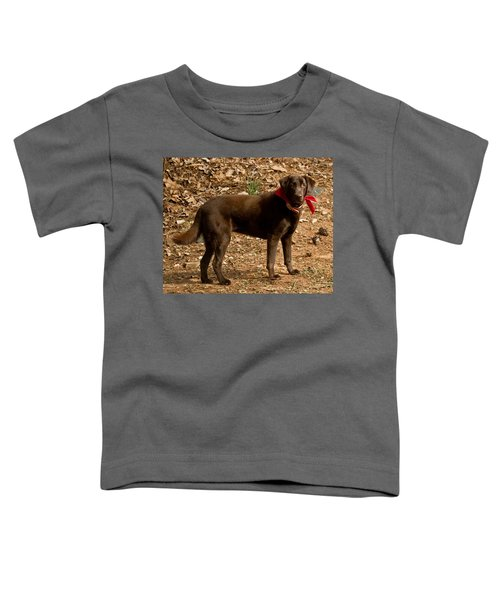Chocolate Lab Toddler T-Shirt