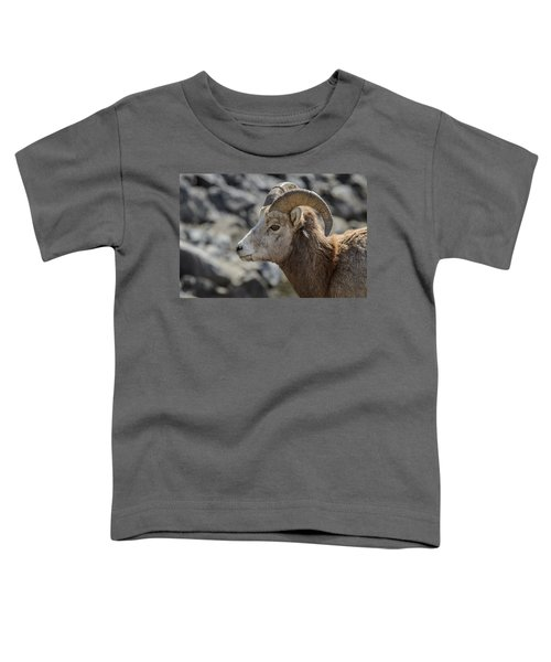 Close Big Horn Sheep  Toddler T-Shirt