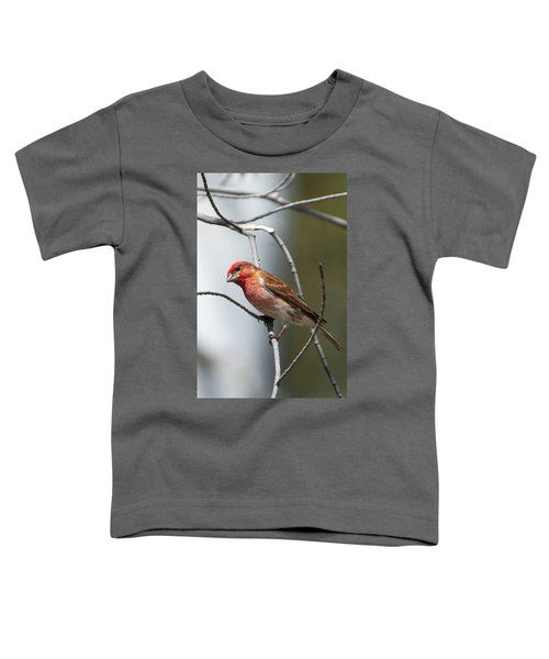 Close-up Of A Red-headed Purple Finch Toddler T-Shirt