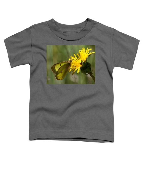 Clouded Sulfur Toddler T-Shirt