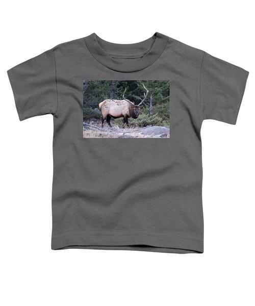 Colorado Bull Elk Toddler T-Shirt