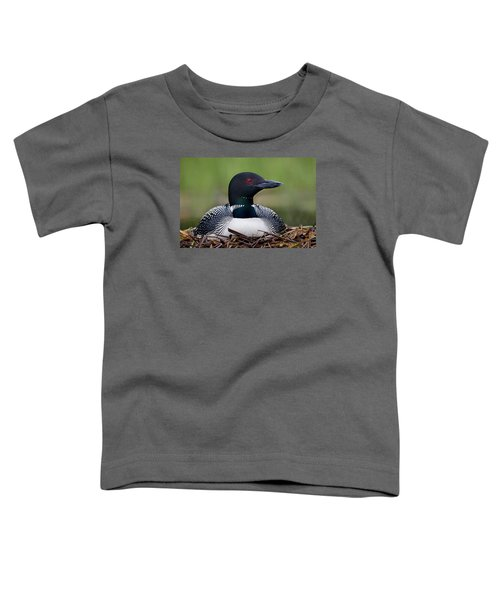 Common Loon On Nest British Columbia Toddler T-Shirt by Connor Stefanison
