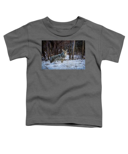 Coyote In The Meadow  Toddler T-Shirt