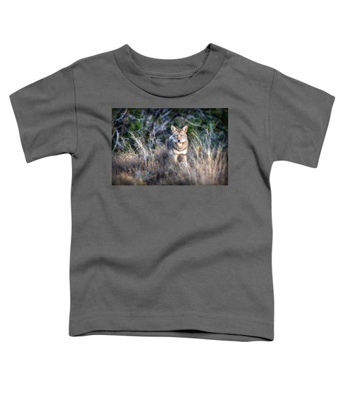 Coyote Stare Down Toddler T-Shirt