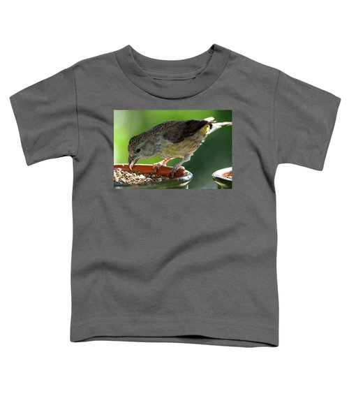 Crossbill Loxia Curvirostra Female Toddler T-Shirt