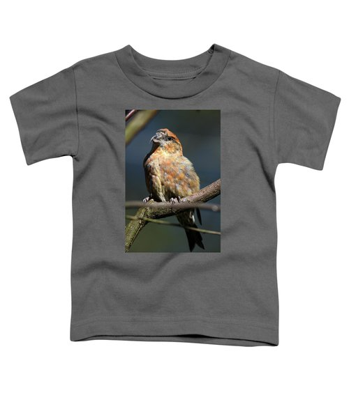 Crossbill Loxia Curvirostra Male Spain Toddler T-Shirt