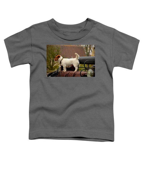 Cute Dog On Carriage Seat Bruges Belgium Toddler T-Shirt