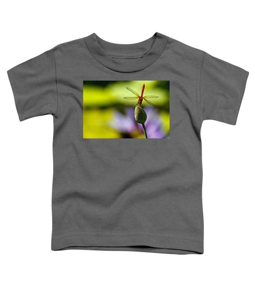 Dragonfly Display Toddler T-Shirt
