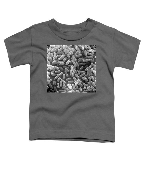 E. Coli Bacteria Sem X24,000 Toddler T-Shirt