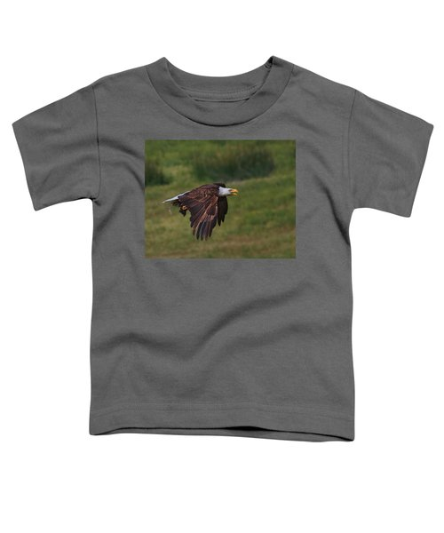 Eagle With Prey Toddler T-Shirt