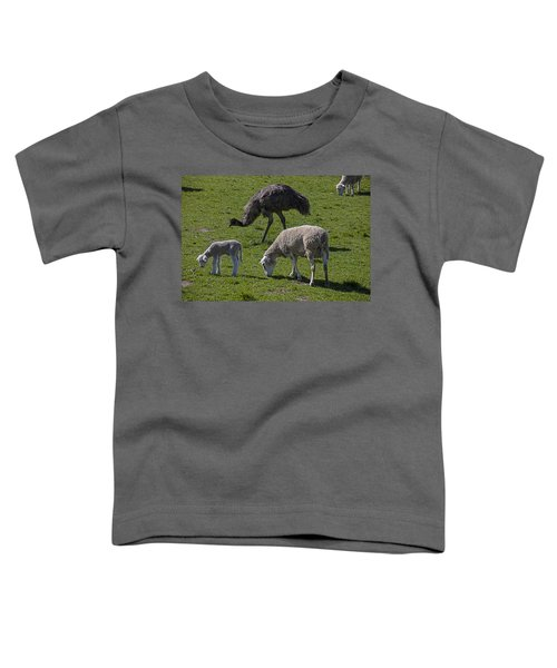 Emu And Sheep Toddler T-Shirt by Garry Gay