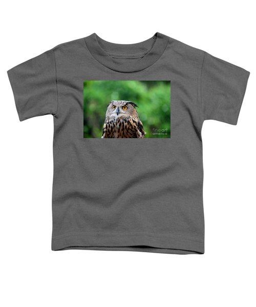 Eurasian Or European Eagle Owl Bubo Bubo Stares Intently Toddler T-Shirt
