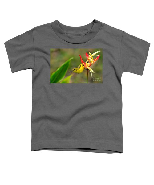 Female Olive Backed Sunbird Clings To Heliconia Plant Flower Singapore Toddler T-Shirt