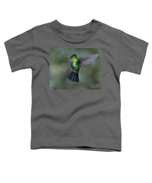 Fiery-throated Hummingbird..  Toddler T-Shirt