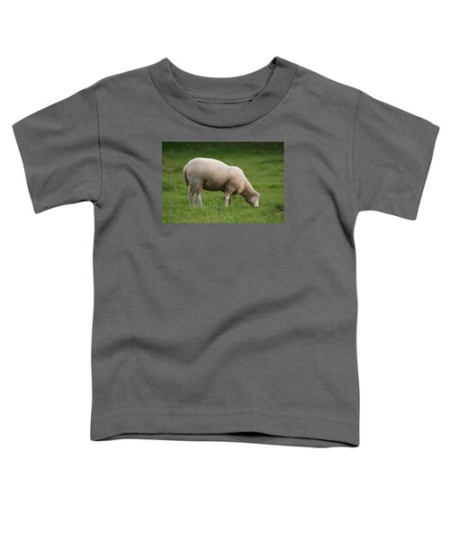 Grazing Sheep Toddler T-Shirt