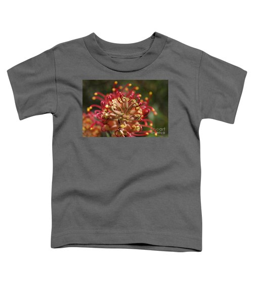 Grevillea Superb Australian Flora Toddler T-Shirt