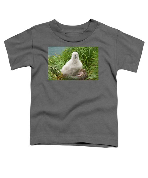 Grey-headed Albatross Chick Toddler T-Shirt by Yva Momatiuk John Eastcott