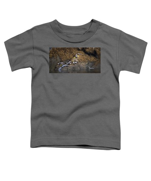 Harbor Seals Toddler T-Shirt