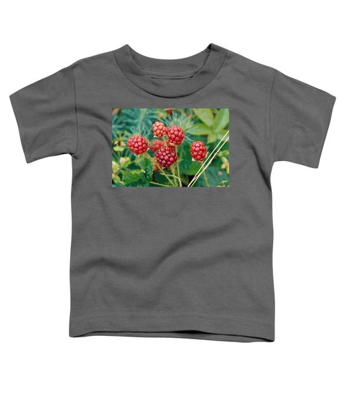 Highbush Blackberry Rubus Allegheniensis Grows Wild In Old Fields And At Roadsides Toddler T-Shirt by Anonymous