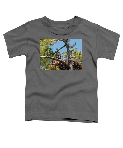 Immature Bald Eagle Toddler T-Shirt